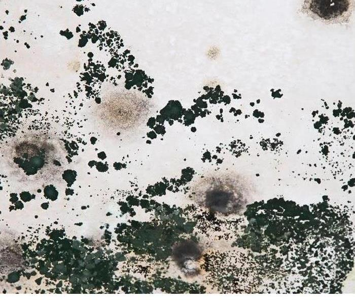 Mold Remediation Queen Annes, Kent Island, Caroline County Residents:  Follow These Mold Safety Tips If You Suspect Mold